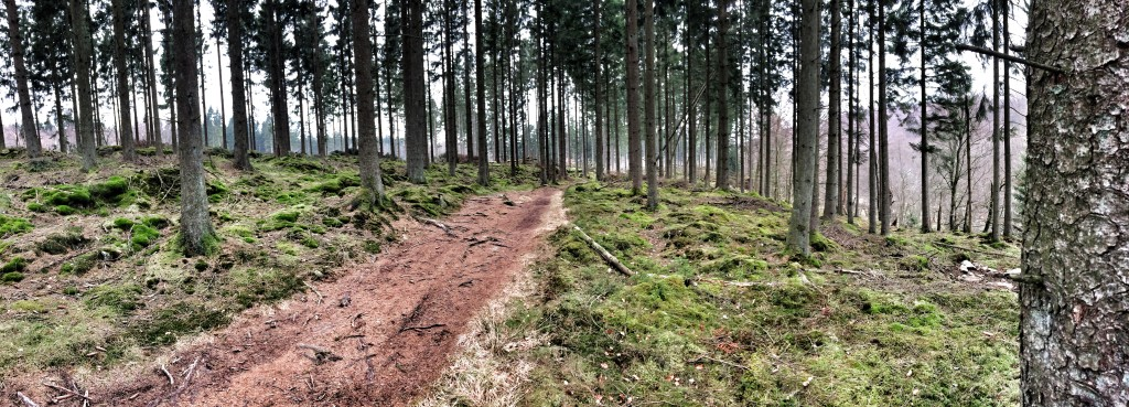 Den pæne svenske skov